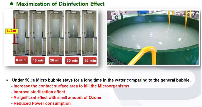 bwms disinfection effect